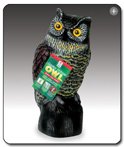 Exceptionnel Hand Painted Details Give The Owl A Realistic Look. View Larger.